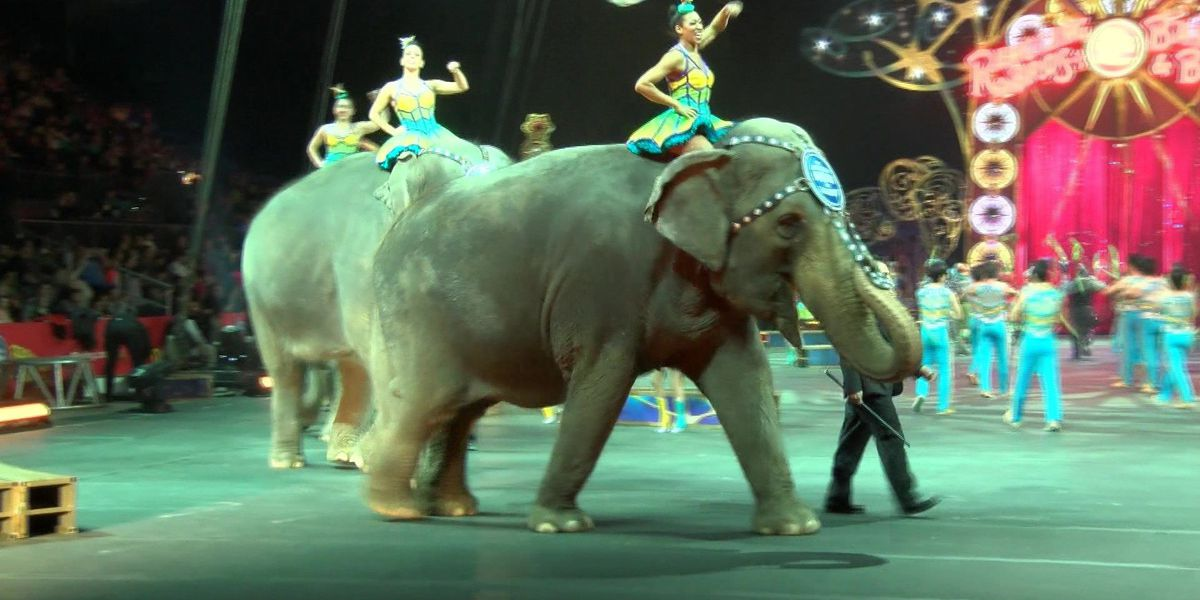 Ringling Bros. and Barnum & Bailey elephants to leave traveling circus in May 2016