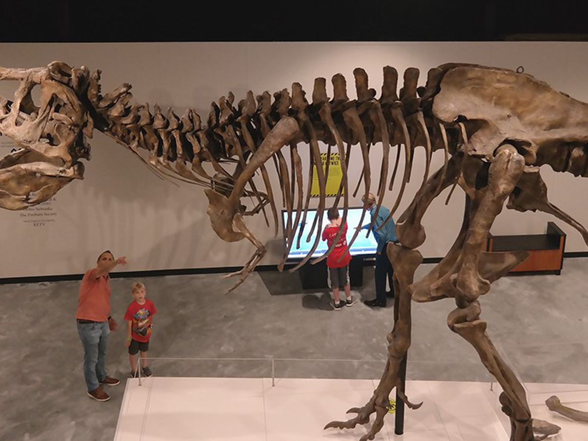 Learn about T. rex's family tree in this new Science Museum of Virginia exhibit