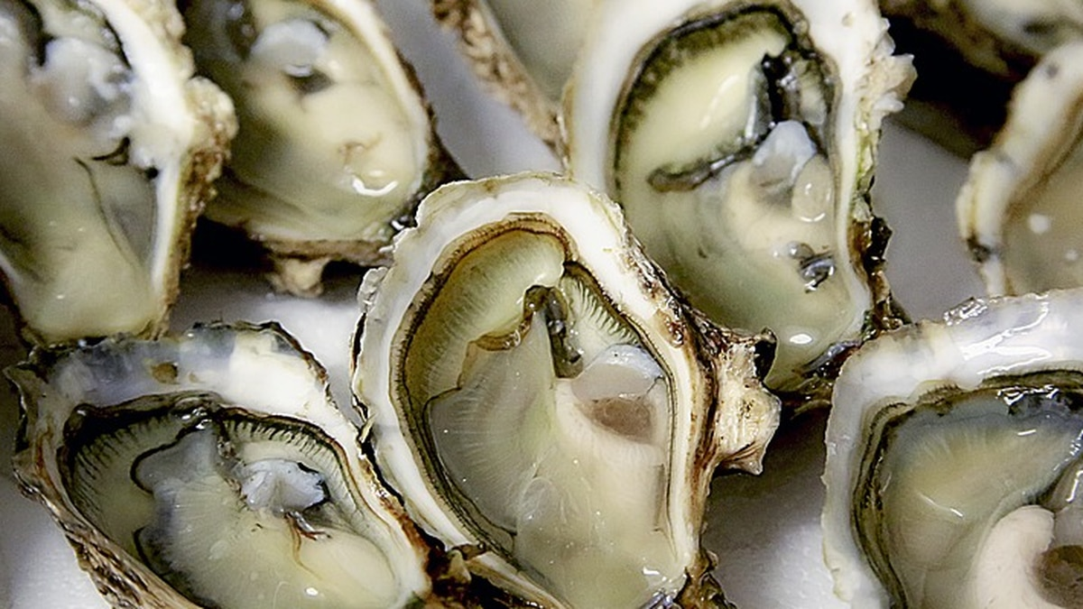 Locally-grown oysters offered at pop-up event in Richmond