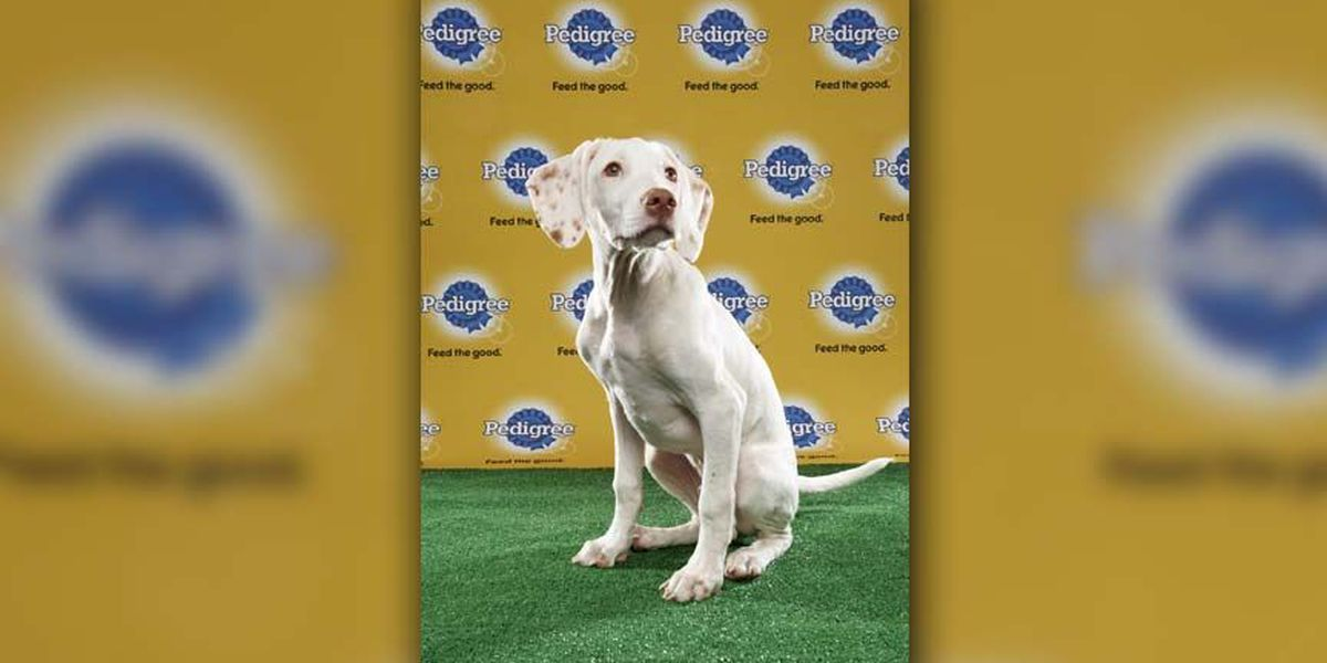 Dog from Goochland appears in Puppy Bowl