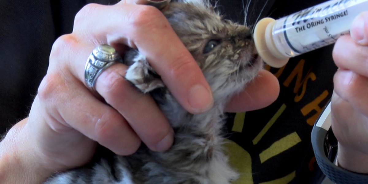 Kittens hurt from improper hazardous materials disposal in north Alabama