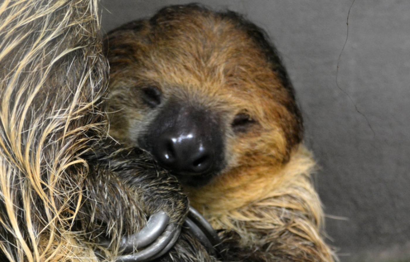 The Metro Richmond Zoo announced it will be opening a new sloth exhibit.