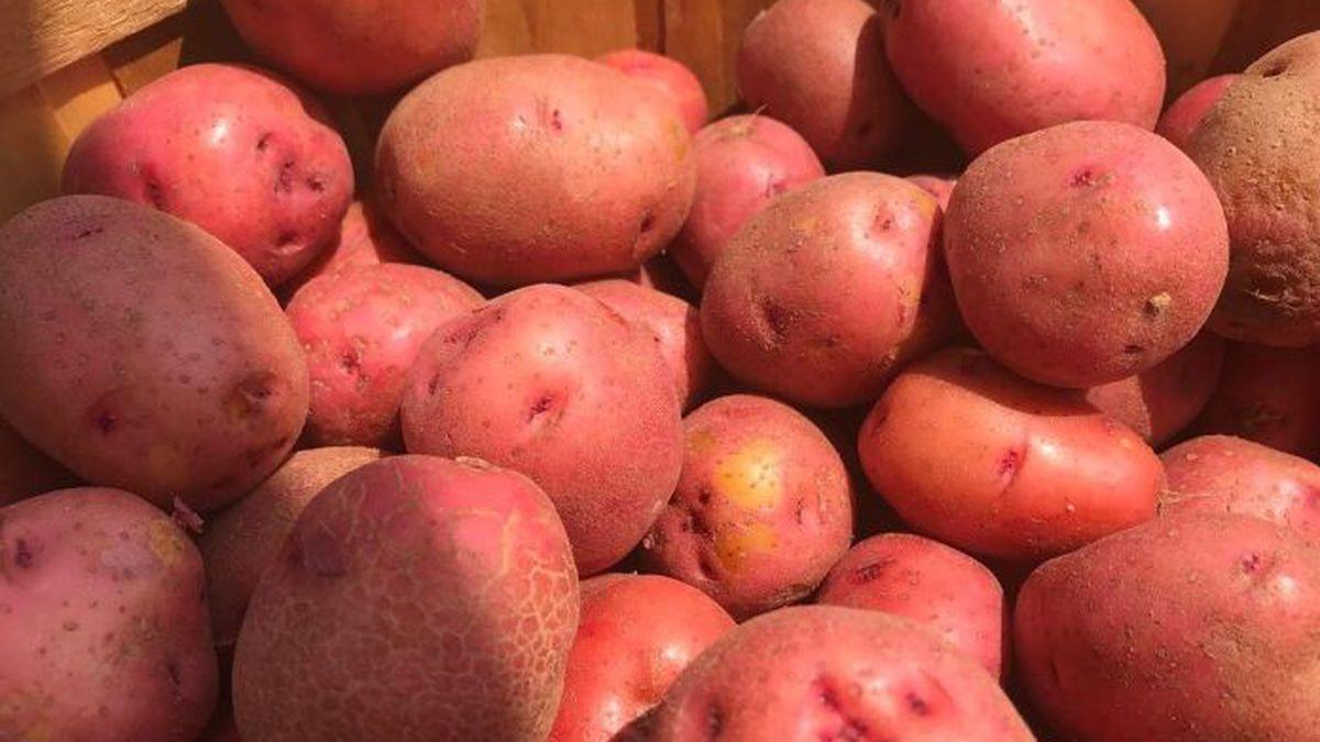 Va. potato prices increase as much as 120%
