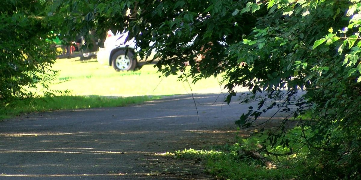 On Your Side: Man complains of neighbor's overgrown forestry
