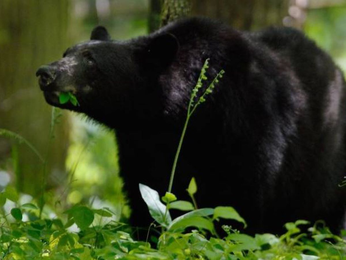 Police warn residents of bear sighting