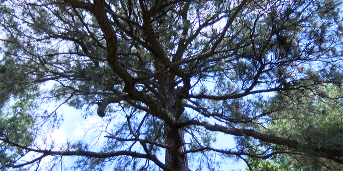 Richmond woman out $900 for tree removal work that hasn't happened