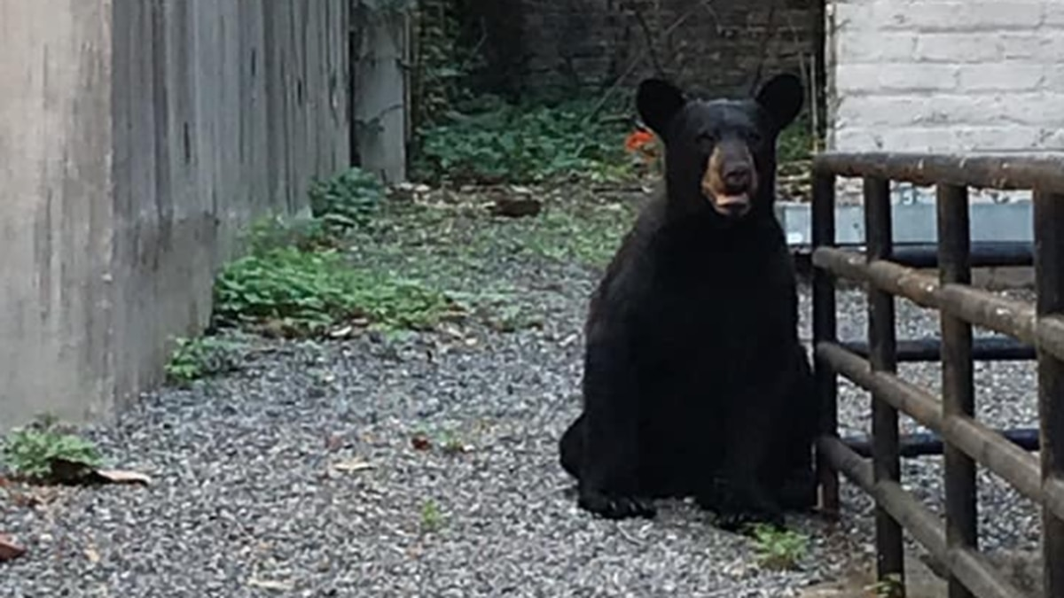 Bear relocated after being found along Cary Street in Richmond
