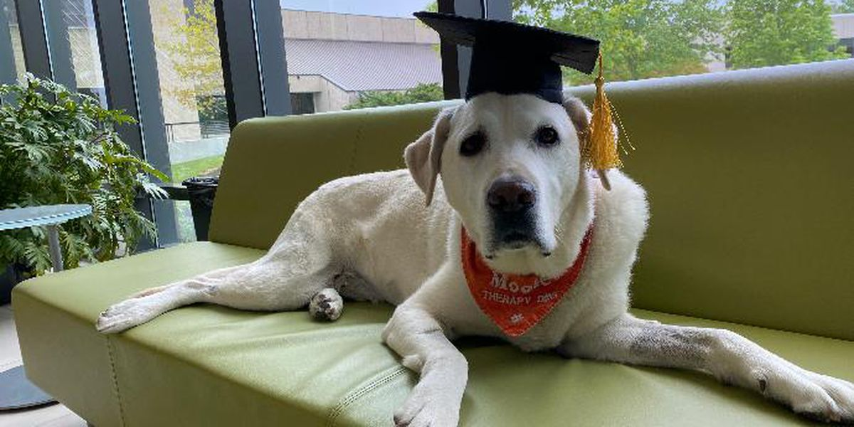 Beloved Virginia Tech therapy dog Moose to earn honorary doctorate