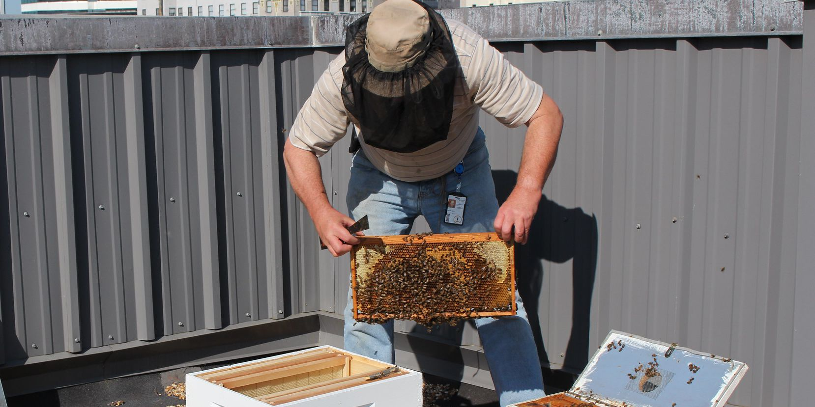 Virginia residents can get free beehives