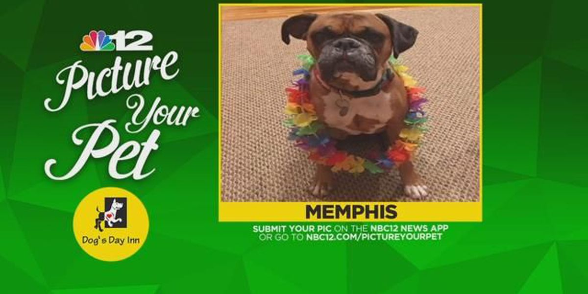 'Picture Your Pet' dog missing in Varina