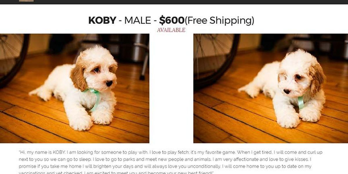 Woman loses $600 to online puppy scam