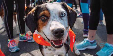 Richmond SPCA annual Dog Jog set for March 23