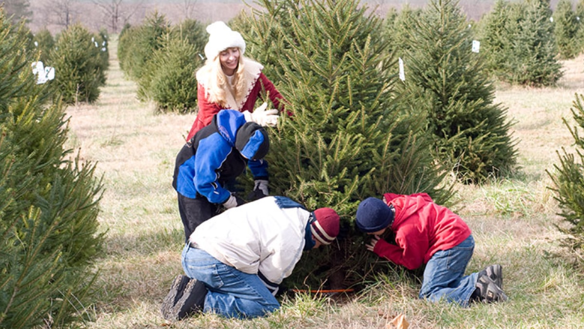 Here's where you can hunt for the perfect Christmas tree in Central Va.