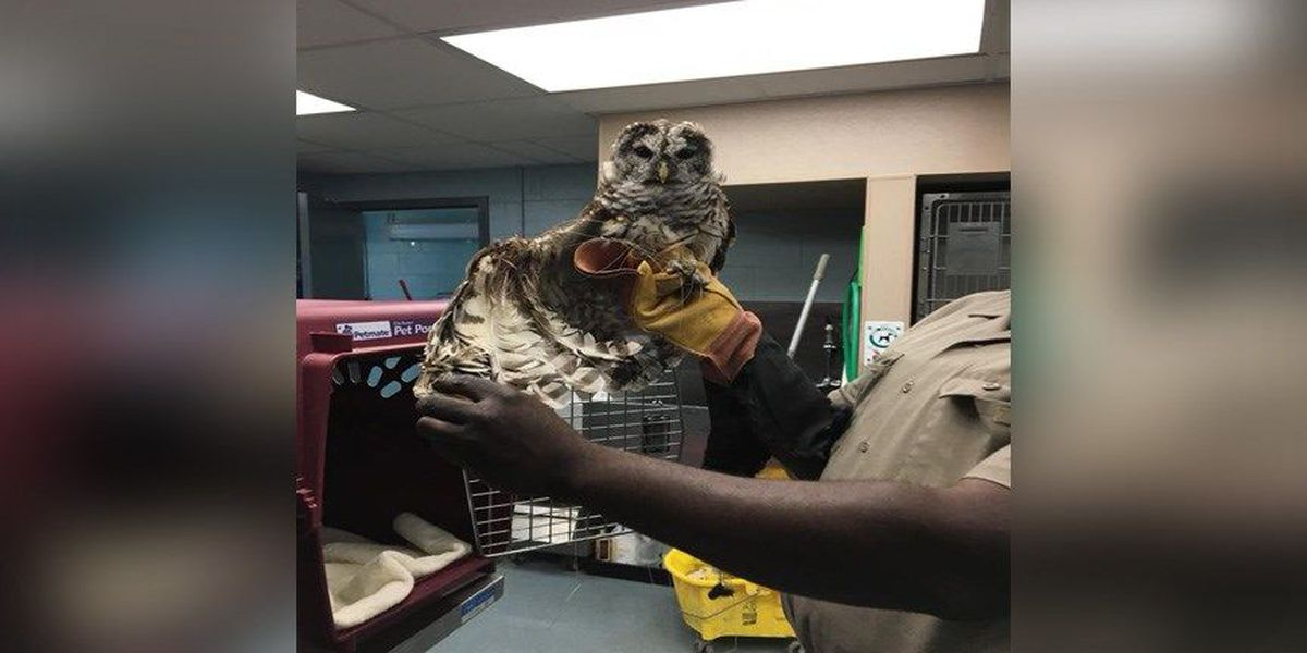 Richmond Animal Care and Control helps injured owl