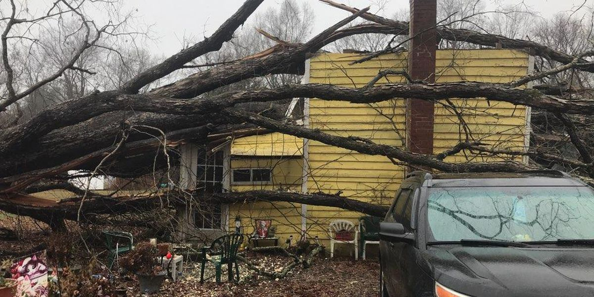 Family of four rescued after tree falls onto Hanover home