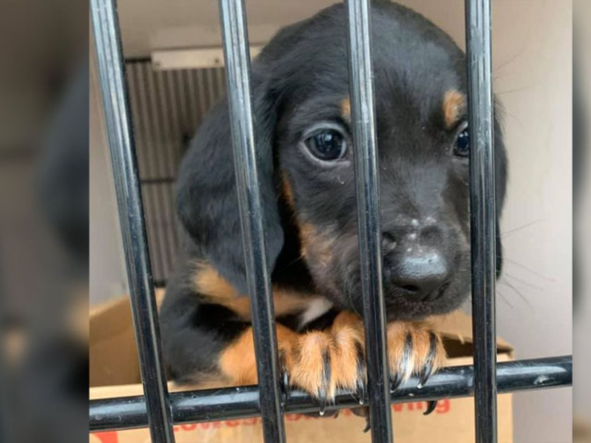 Stolen puppy returned to Virginia rescue facility