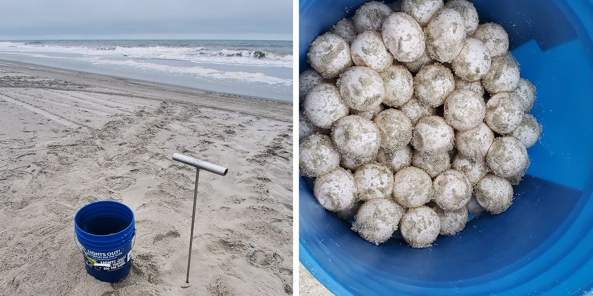 Myrtle Beach welcomes first sea turtle nest of 2020