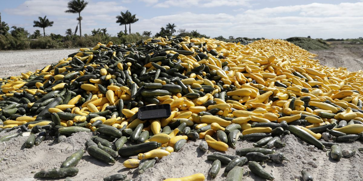 Coronavirus claims an unexpected victim: Florida vegetables
