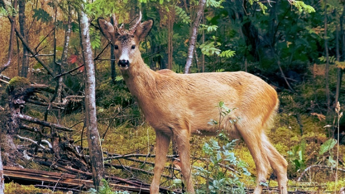 Results of chronic wasting disease surveillance in Virginia released