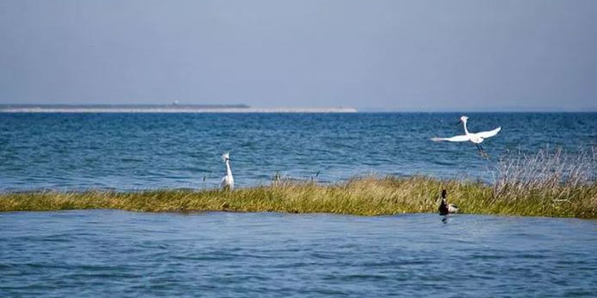 Proposed rollback of federal water protection rules would leave wetlands along Chesapeake Bay at risk, report says