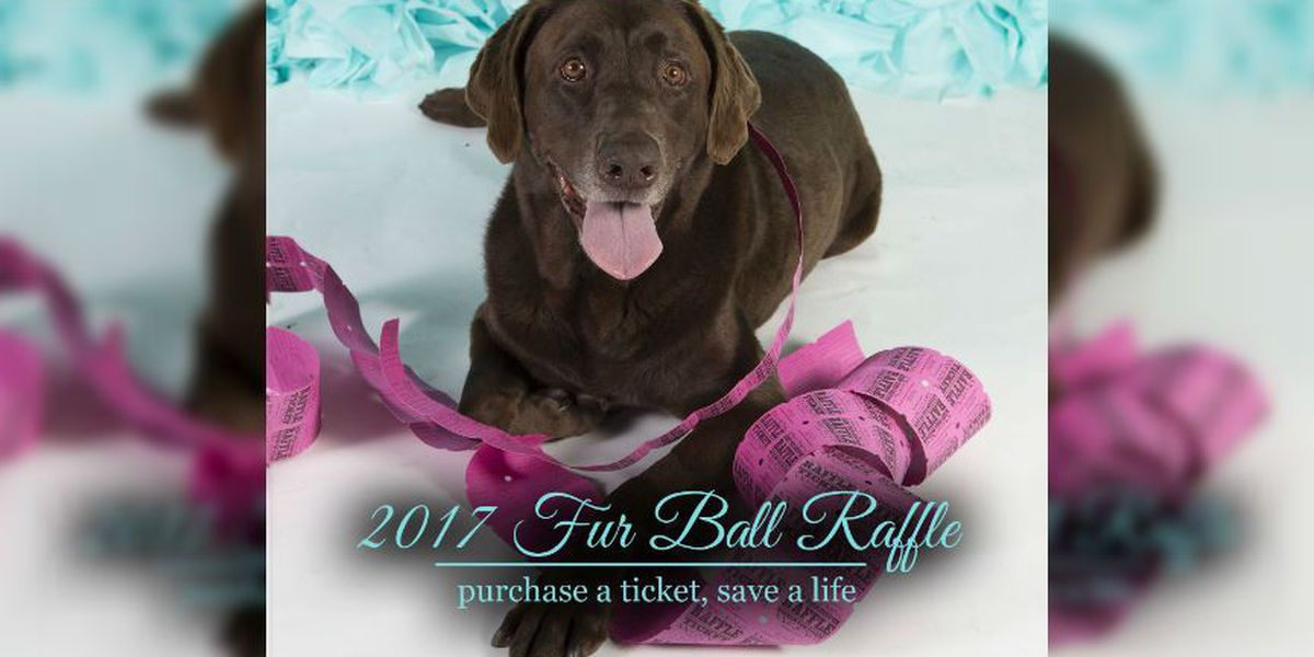 Richmond SPCA holds 19th annual Fur Ball to benefit Cinderella Fund