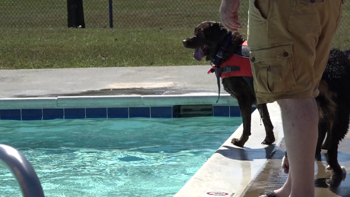 Virginia town throws pool party for dogs