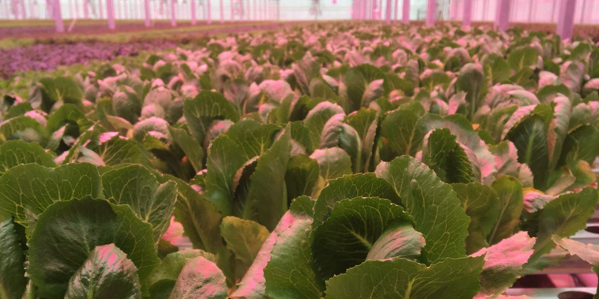 Hydroponic greenhouse opening in Goochland County