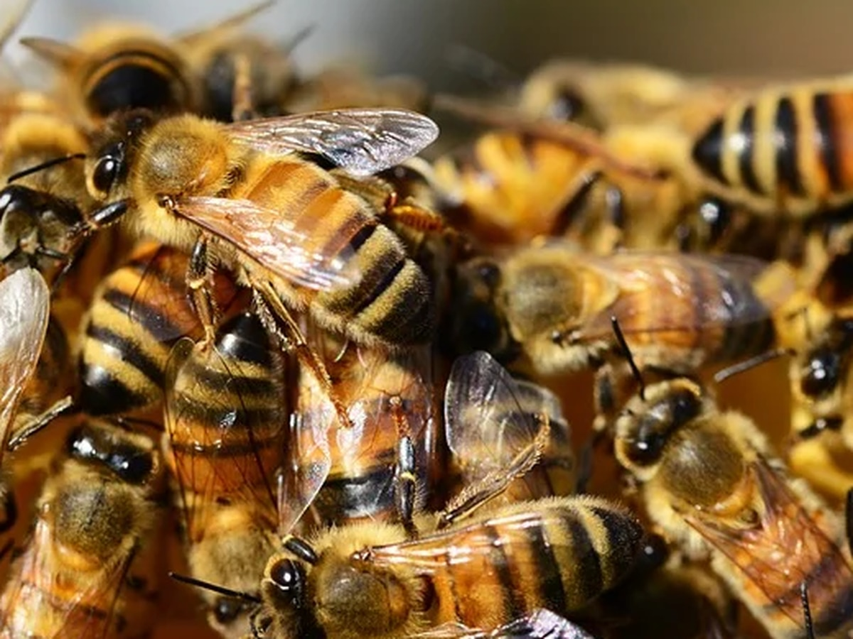 Majority of bee colonies see increase in population