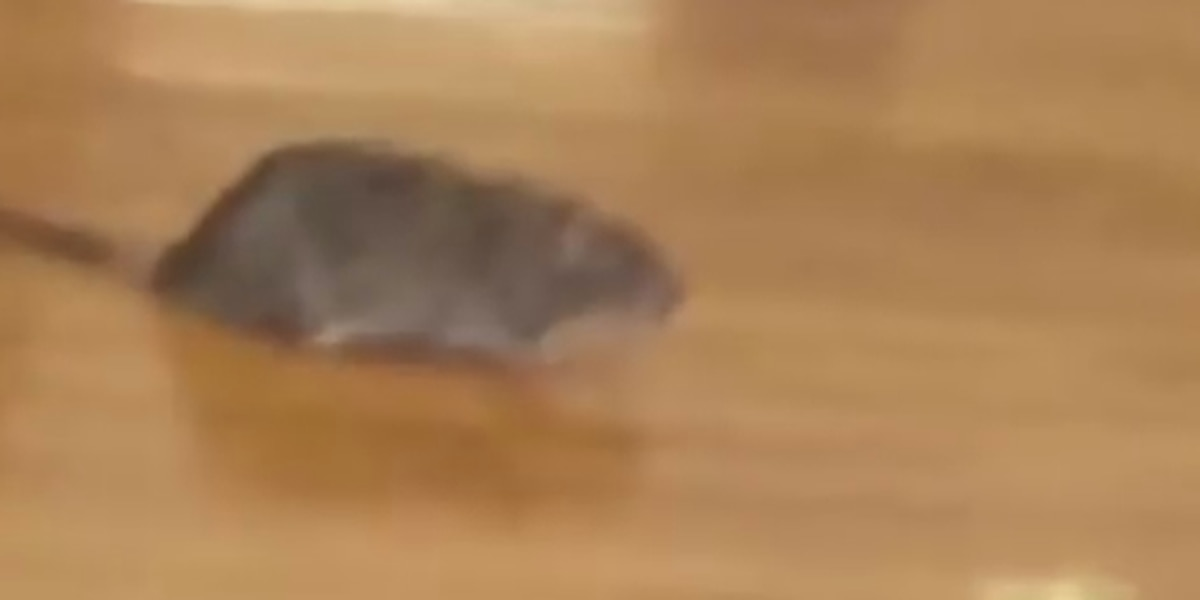 'That's nasty': Apparent rat video angers Richmond students, parents