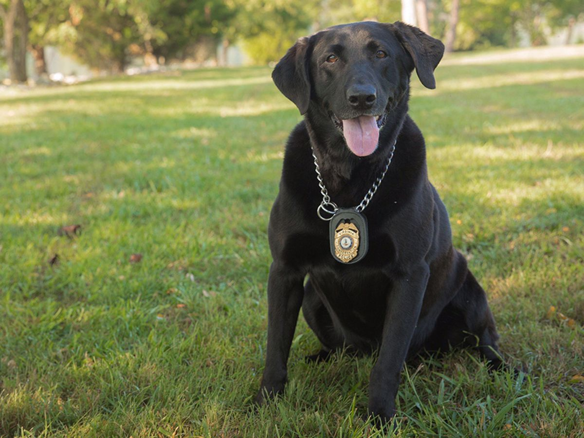 K9 from Department of Game and Inland Fisheries passes away