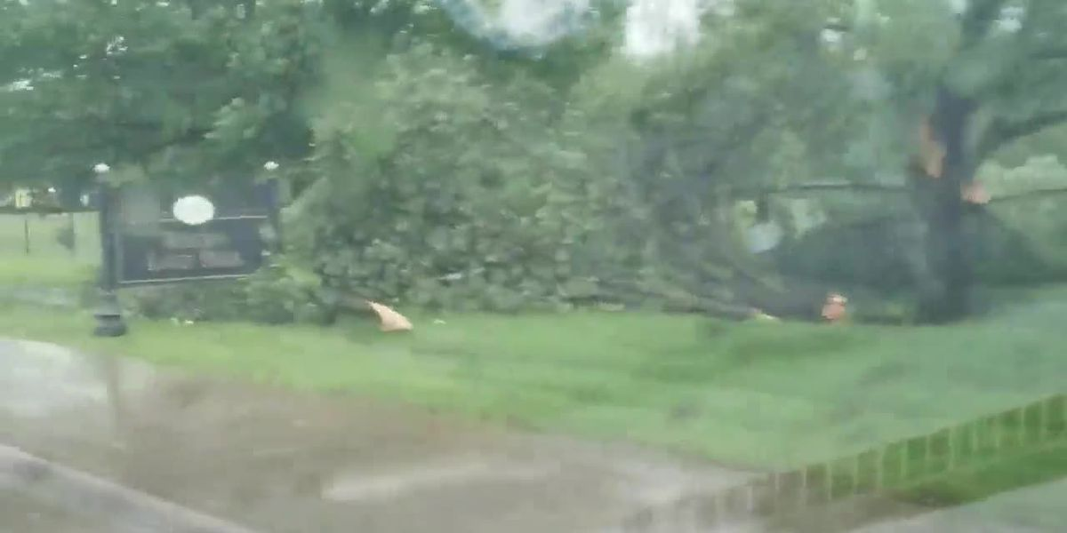 RAW: Trees snapped by storm in Farmville