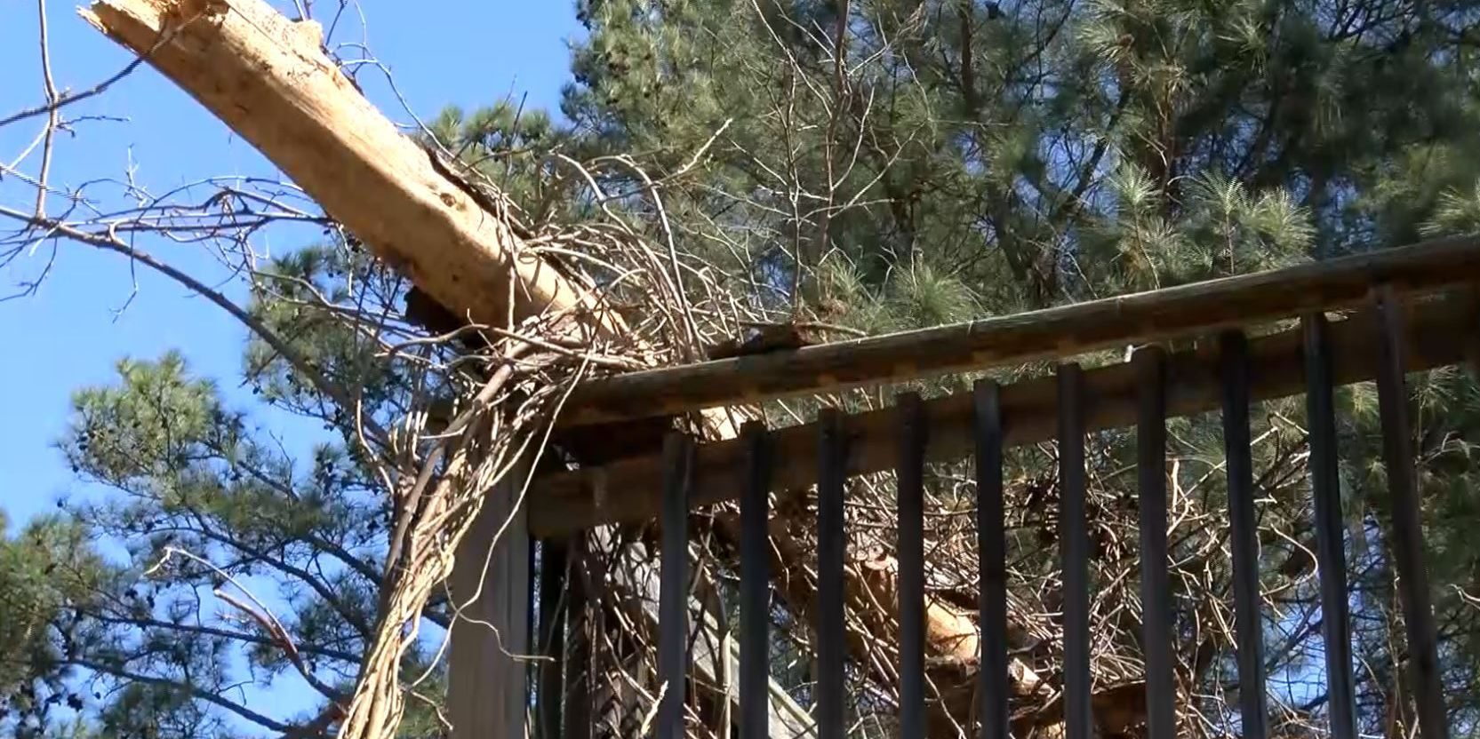 Tree woman was worried about falls on her deck; who foots the bill?