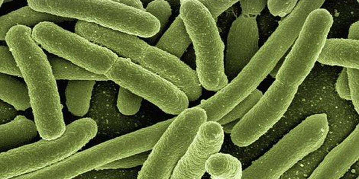 Chesterfield County launches website on Legionella; 7 schools test positive for bacteria