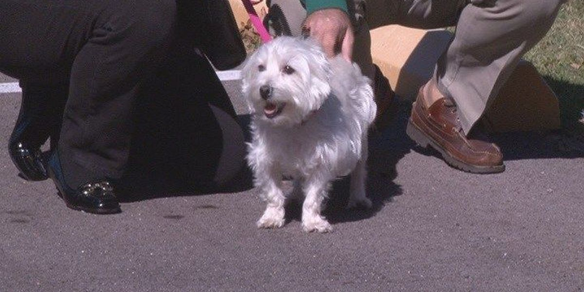 'Blessing of the Animals' canceled due to COVID-19