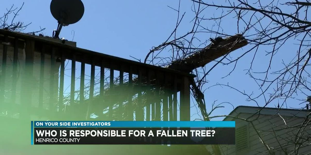 Who is responsible for a fallen tree?
