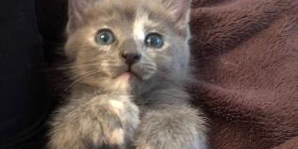 Want to name a rescue kitten? Here's your chance