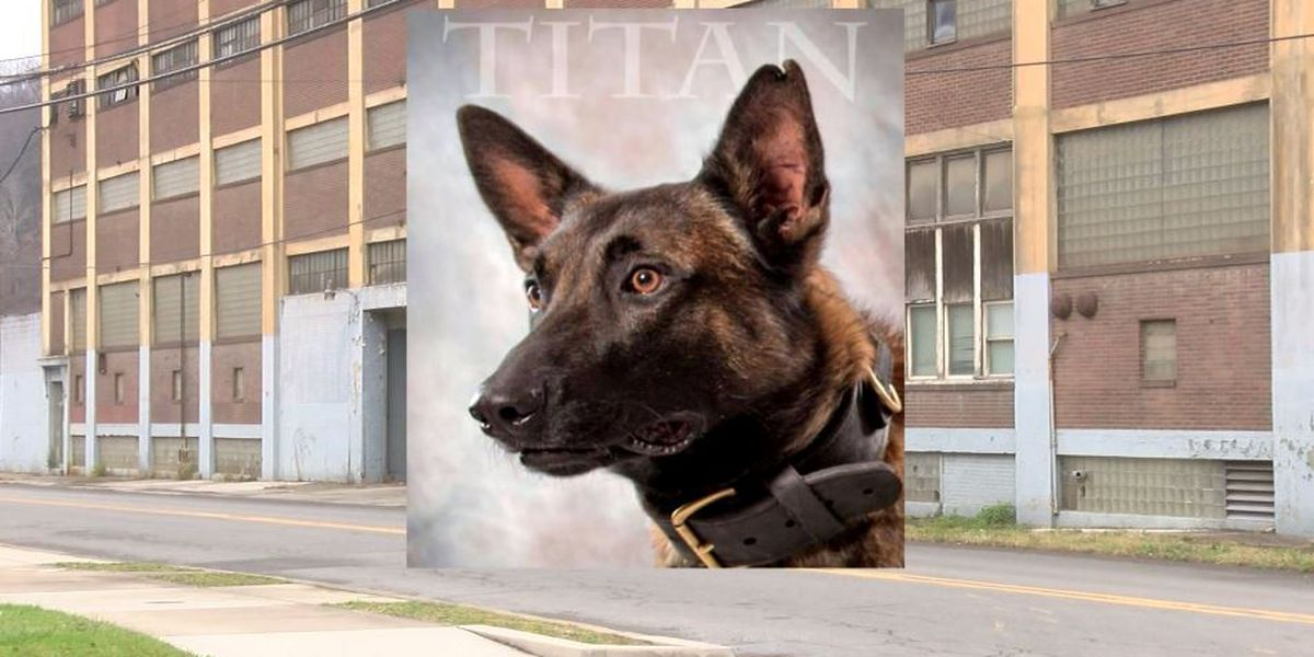 K-9 dies during search for burglary suspects in Pennsylvania; 5 arrested
