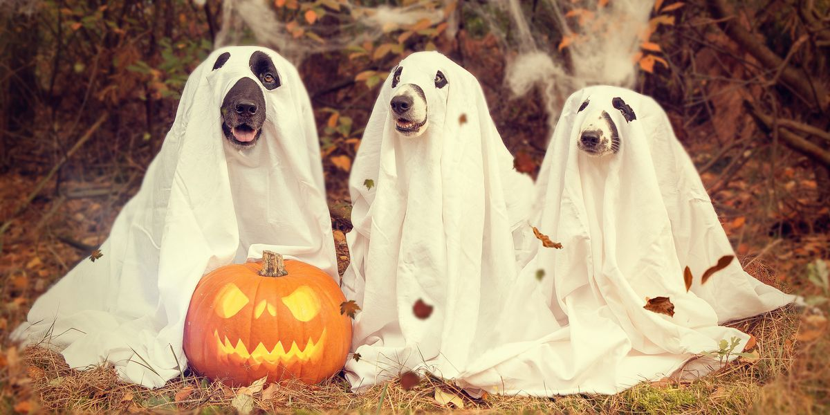 Tips on keeping your pets safe during Halloween
