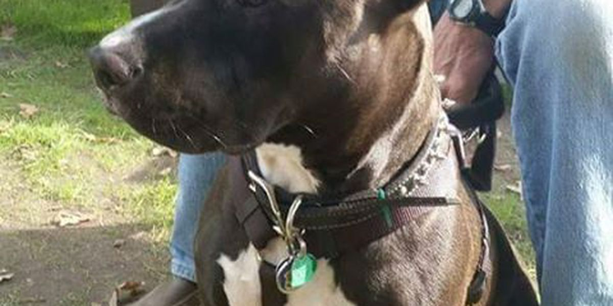 Lost Dog: Have you seen O'Shea?
