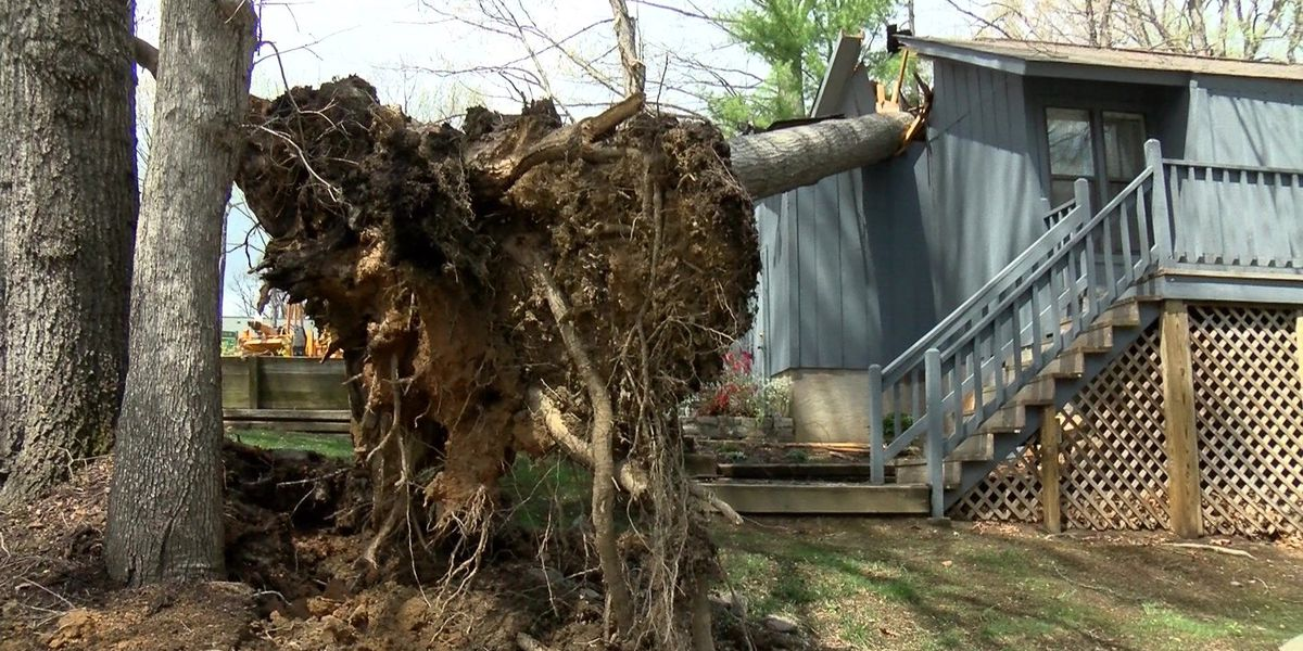 Several trees crash into homes in Chesterfield during storm