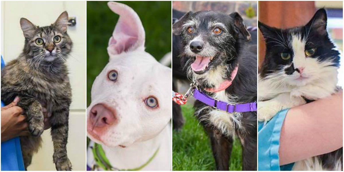 Richmond SPCA holding 'Eggstravaganza' adoption special