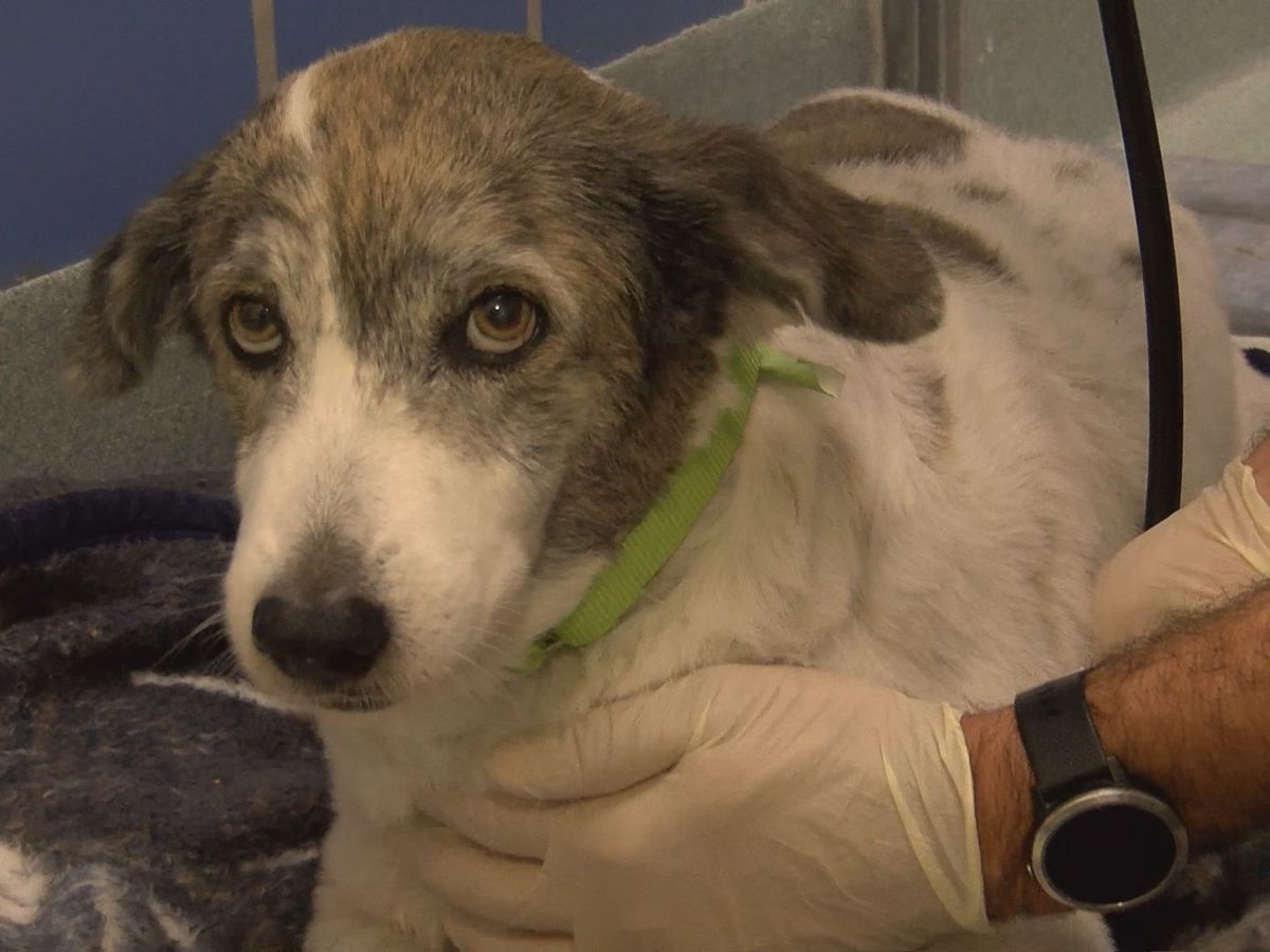 Richmond SPCA welcome 4 dogs from Bahamas