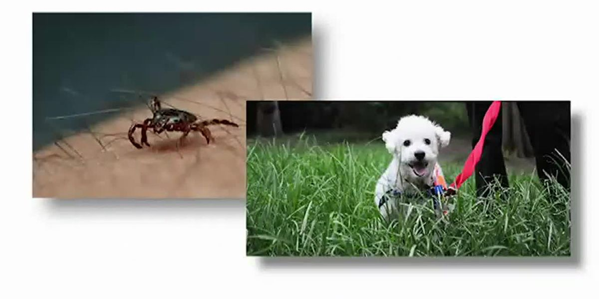 Ways to help avoid being bit by a tick