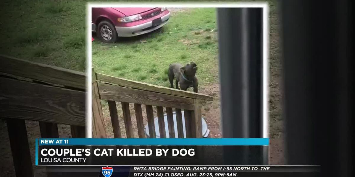 Dog kills couple's cat in Louisa