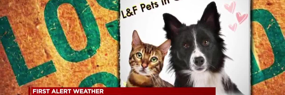 Pets go missing as winter storm hits