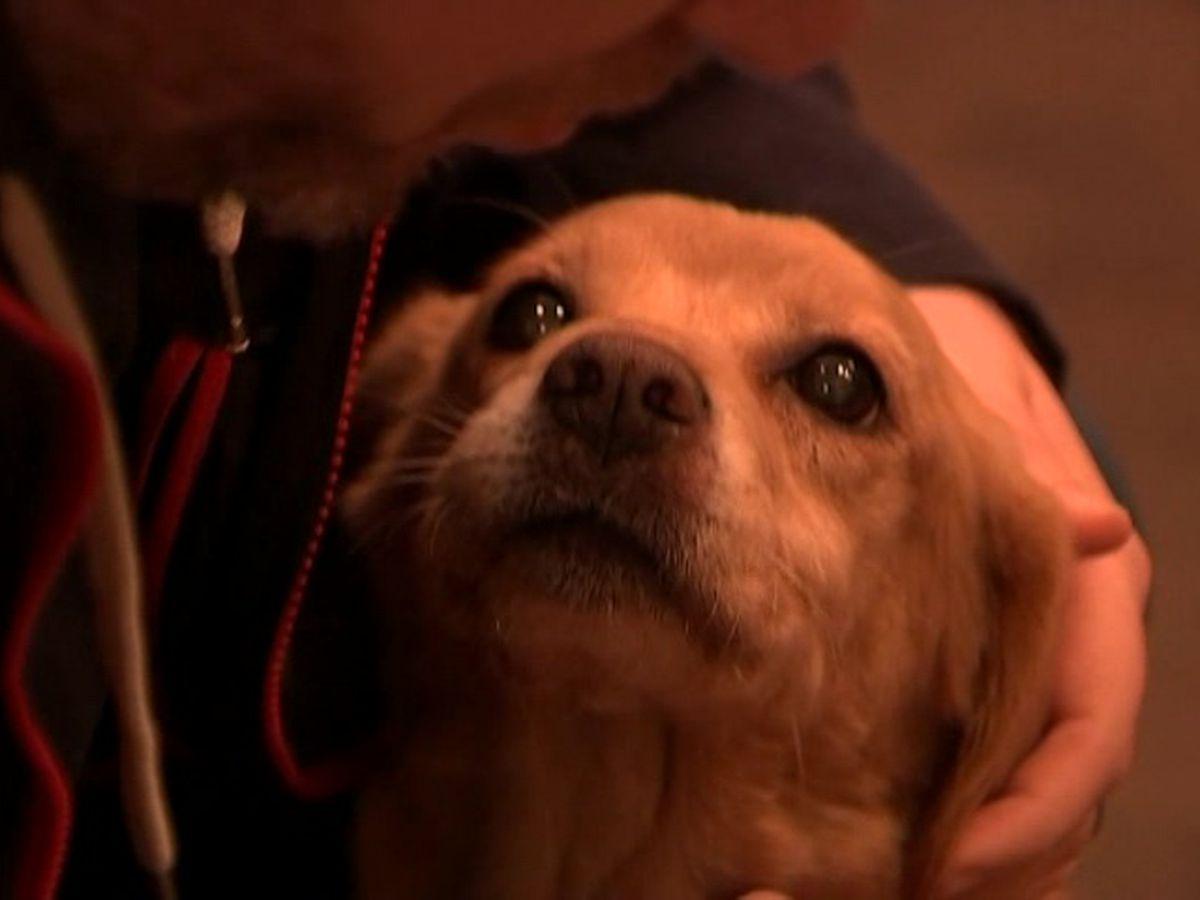Petco Foundation donates $1,000 to Richmond canine rescue