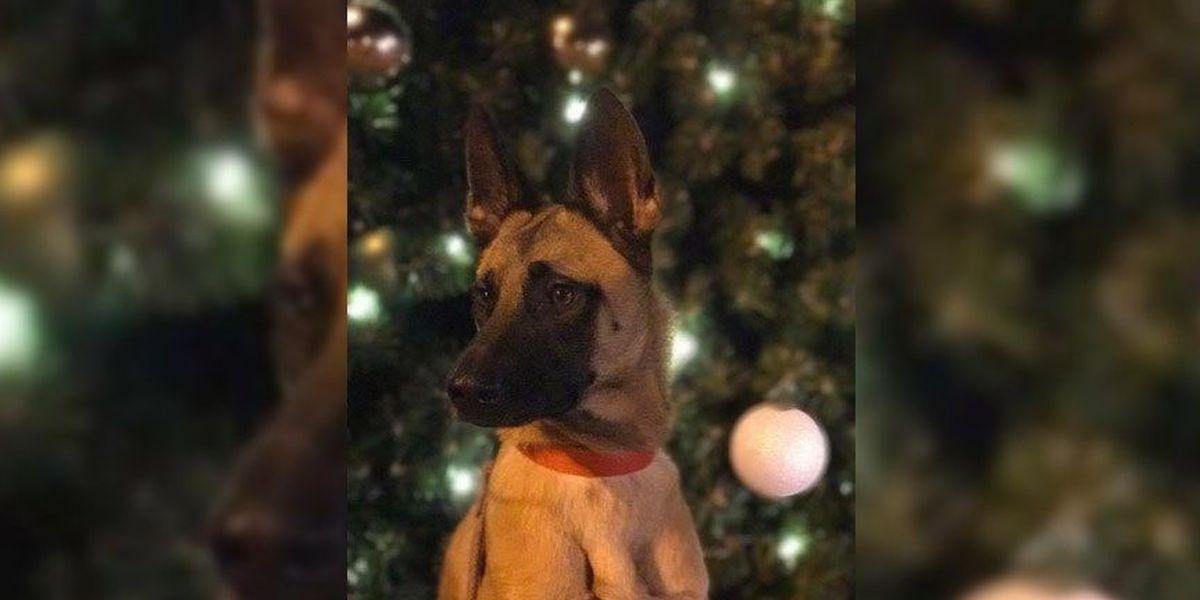 $1,500 reward offered for retired Virginia war dog