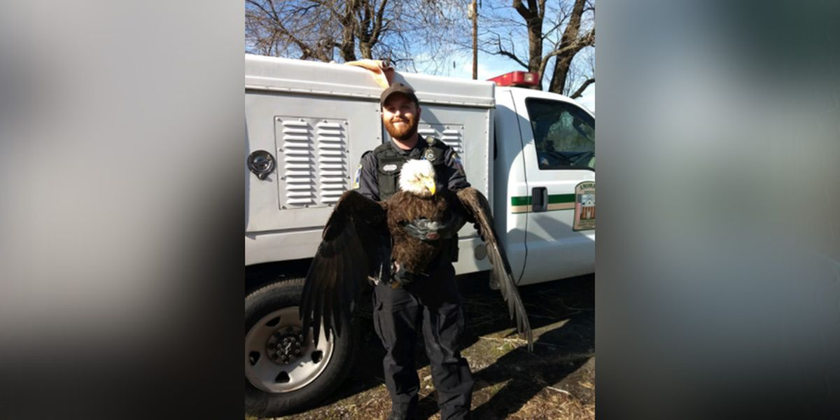 Injured bald eagle rescued in Chesterfield