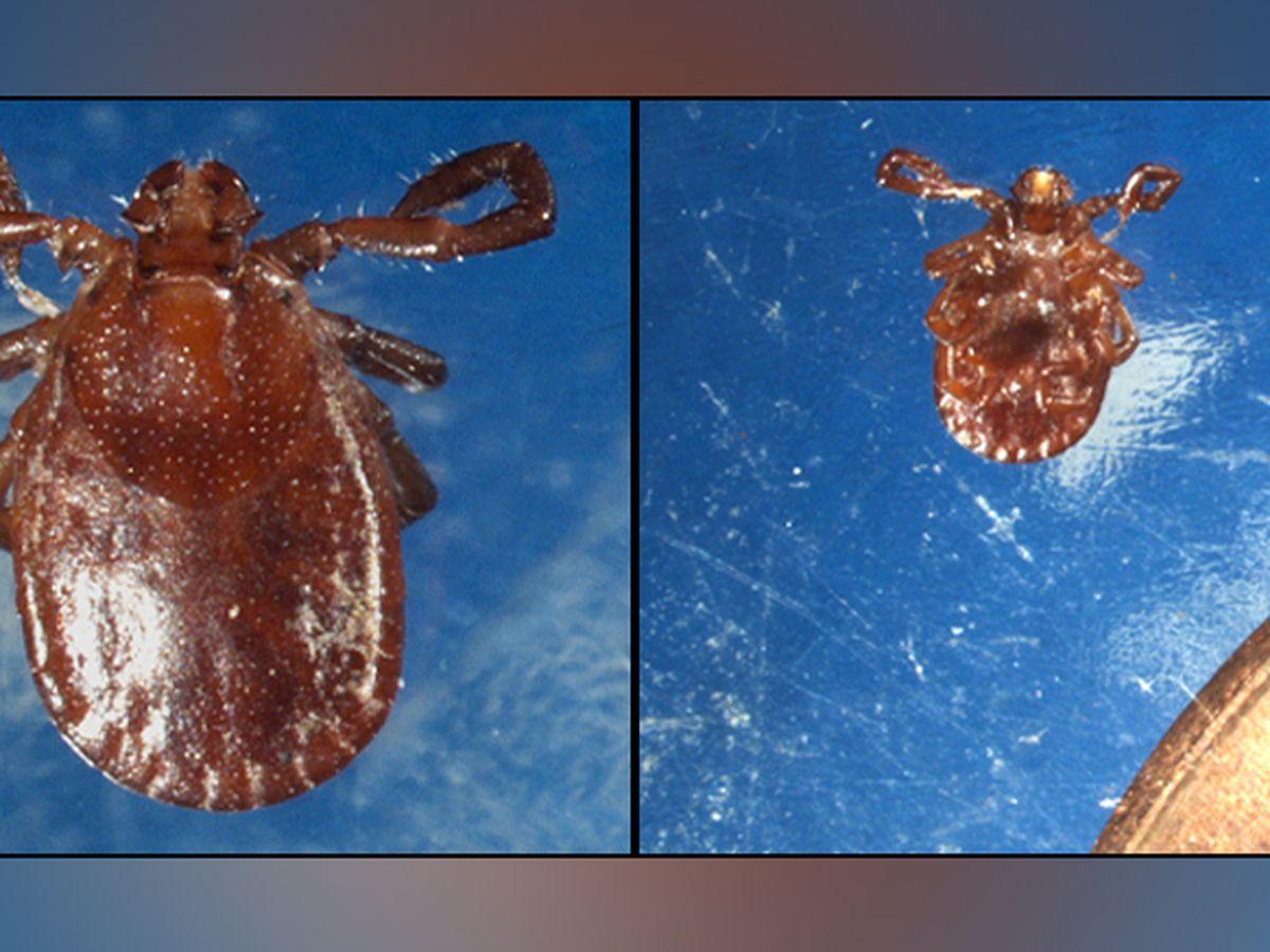 Rare tick found in 24 Va. counties
