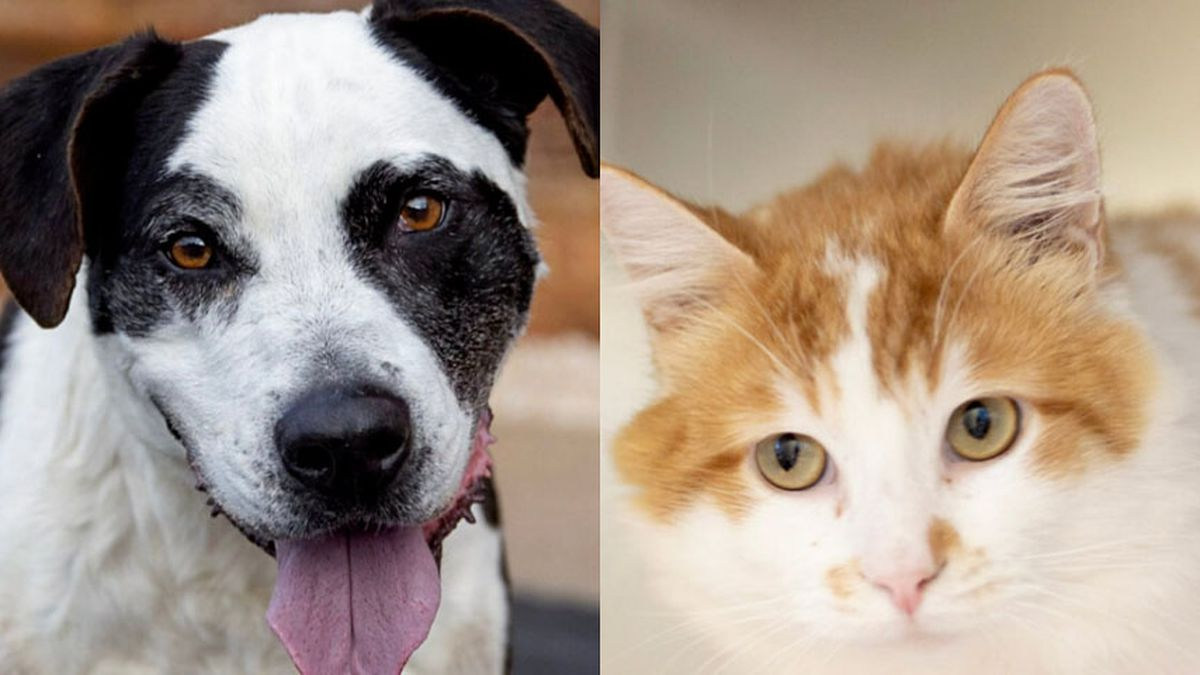 Richmond SPCA will be waiving all adoption fees through Sunday